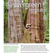 The Evergreen Emeralds – Pacific N American Rainforests