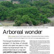 Arboreal Wonders