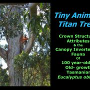Crown Structural Attributes and Canopy Invertebrate Fauna Of Eucalyptus