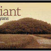 Giant Banyans