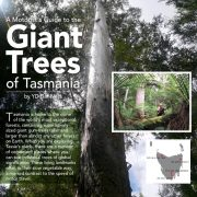 A Motorist's Guide to Giant Trees of Tasmania