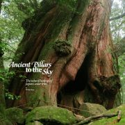 Ancient Pillars to the Sky – Cryptomeria Groves of Japan
