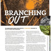 Branching Out -A Treetop Memoir