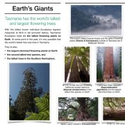 Giant Trees of Tasmania and the World Info Panels