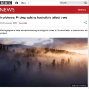 In Pictures_Photographing Australias tallest trees