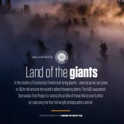 Land of the Giants –  First Full-Length Giant Eucalyptus Portrait