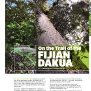On The Trail of the Fijian Dakua (Kauri Trees)