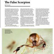 Pseudoscorpions