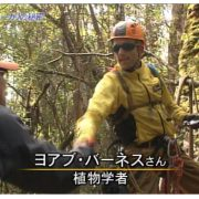 Tasmania_NHK Japan TV Documentary_oncamera treeclimber