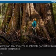 Tasmanian Tree Projects – an intimate portrait from an impossible perspective