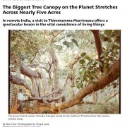 The Biggest Tree Canopy on the Planet Stretches Across Nearly Five Acres
