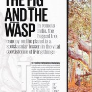 The Fig and the Wasp (World's Broadest Trees)