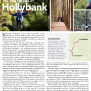 The Two Forests of Hollybank