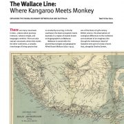 The Wallace Line – Where Kangaroo Meets Monkey
