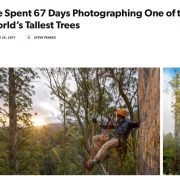 We Spent 67 Days Photographing One of the World's Tallest Trees